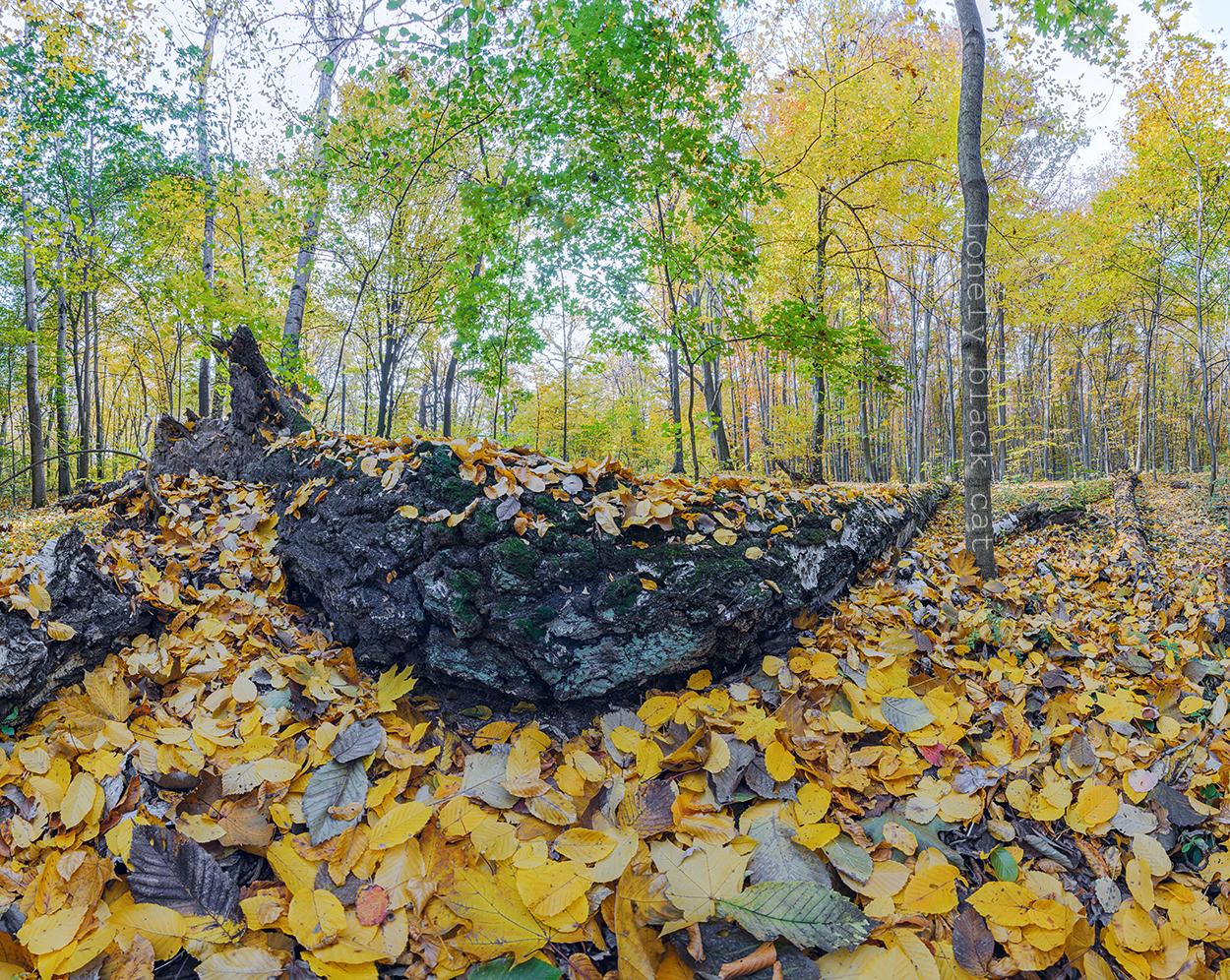 Autumn landscape panorama by lonelyblackcat
