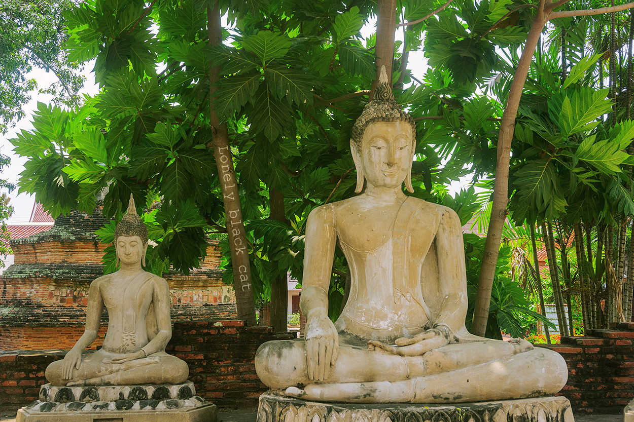 Buddha in meditation lonelyblackcat photography