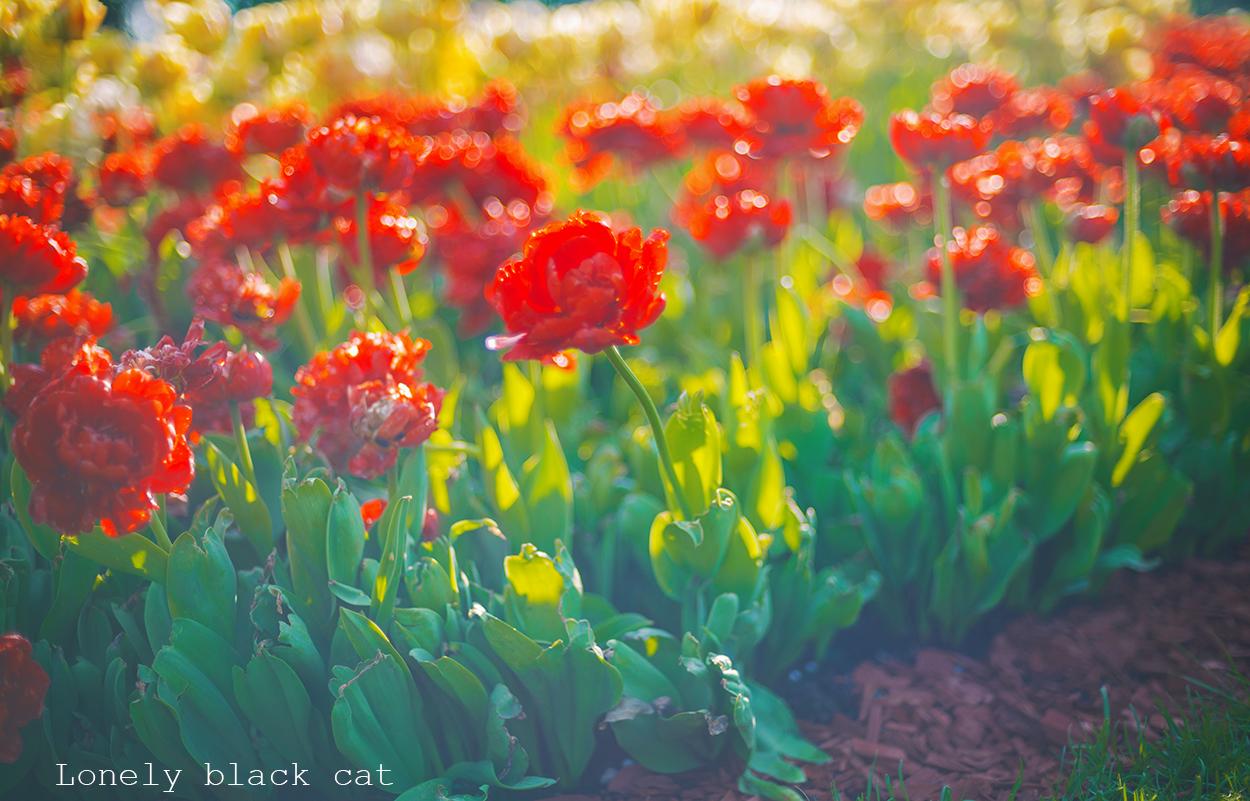 lonelyblackcat beautiful flowers photography