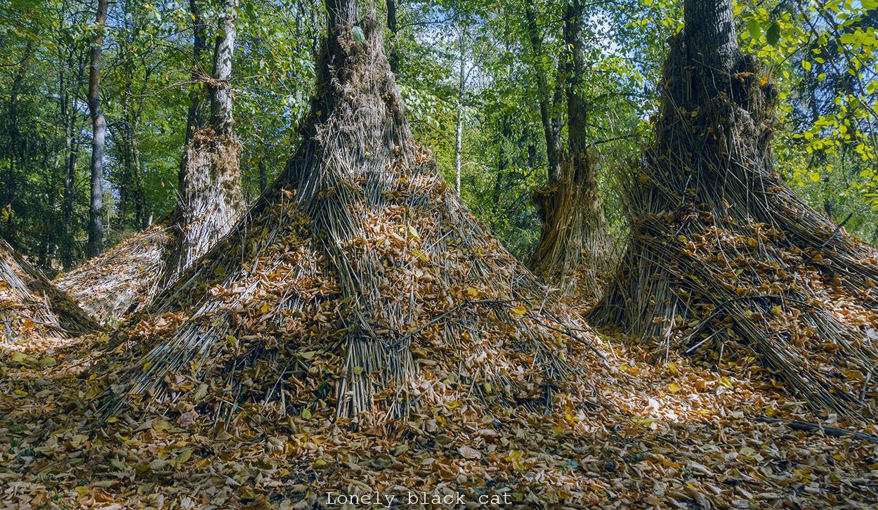 lonelyblackcat autumn landscape photography