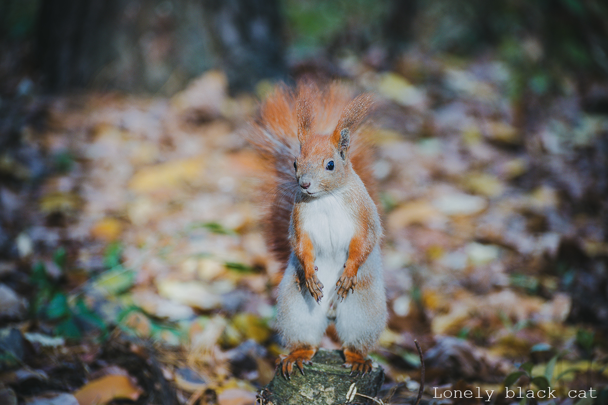 squirrel photograph
