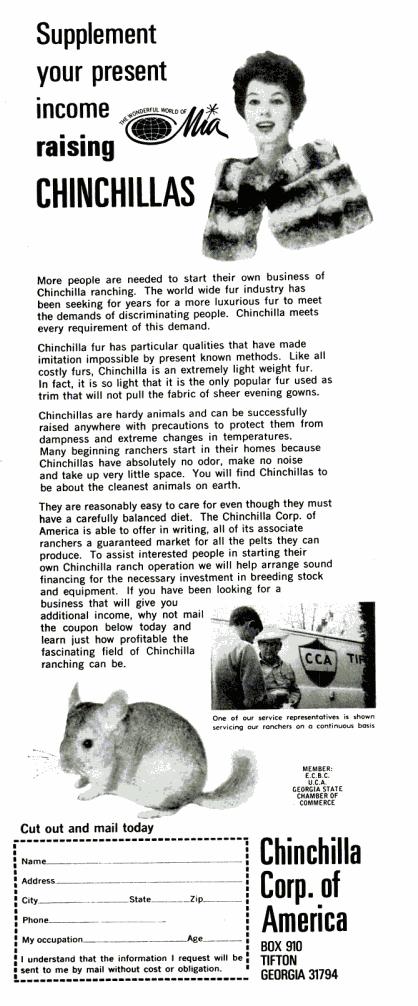 chinchillas fur life june 20 1969