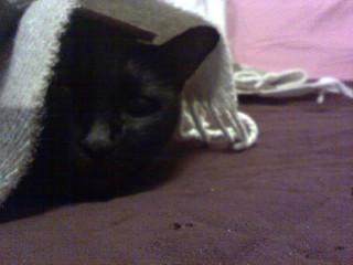 Hiding Quat