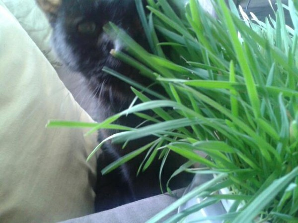 Kitty in Grass