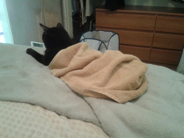 Kitty Under Towel