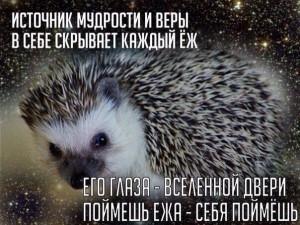 мудрый Ёжик