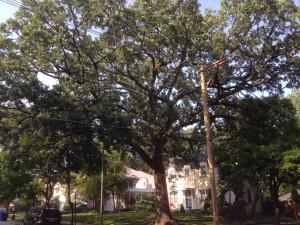 oaktree