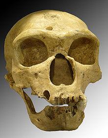 220px-Homo_sapiens_neanderthalensis