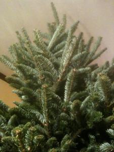 treeinside