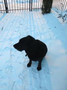 snowromeo