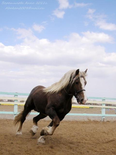 Фото самых красивых лошадей тежыловесав