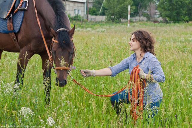 За что я люблю лошадей
