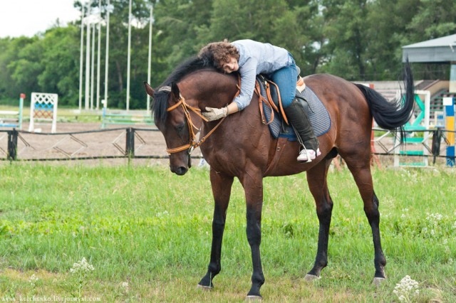 Я люблю лошадь