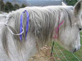 Ласки плетут косички
