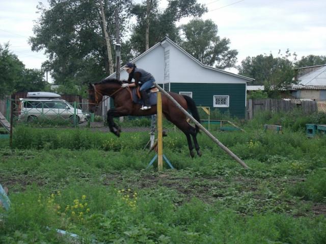 Как научить прыгать коня через препятствие?