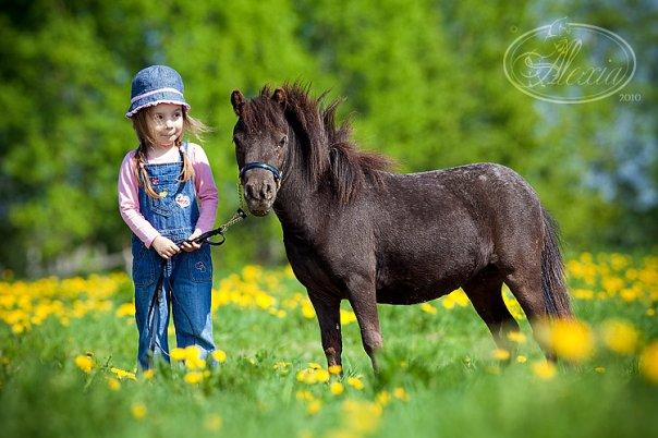 Фото лошади фалабела