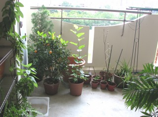 Garden configuration.