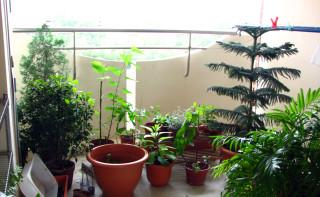 Current garden configuration.