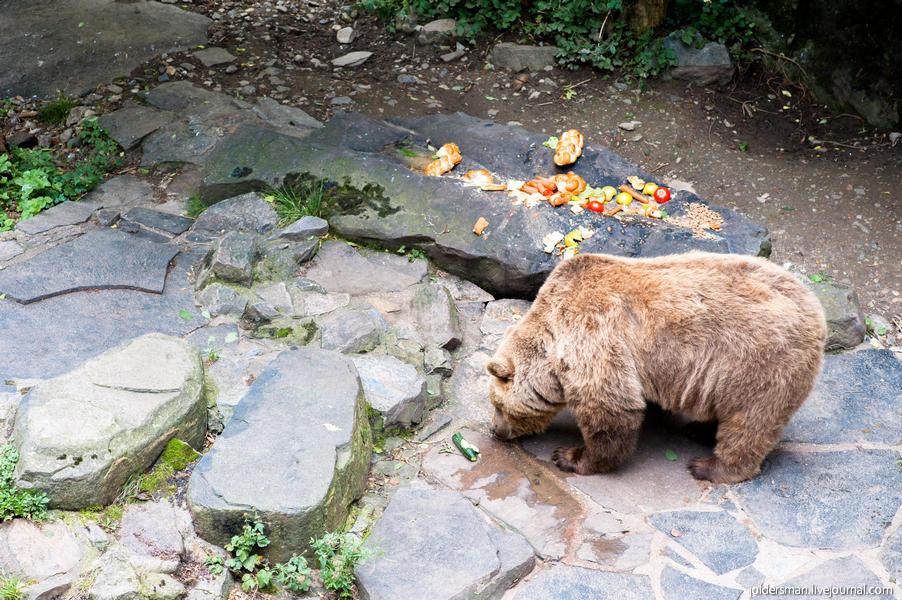 медведь в чешском крумлове