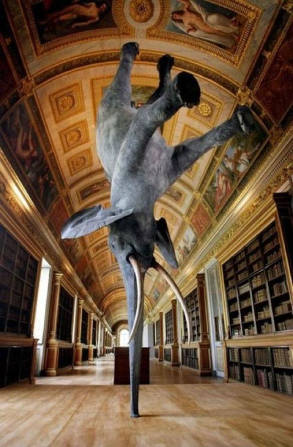 3-Даниэль Фриман - Особенности гравитации для слона.jpg