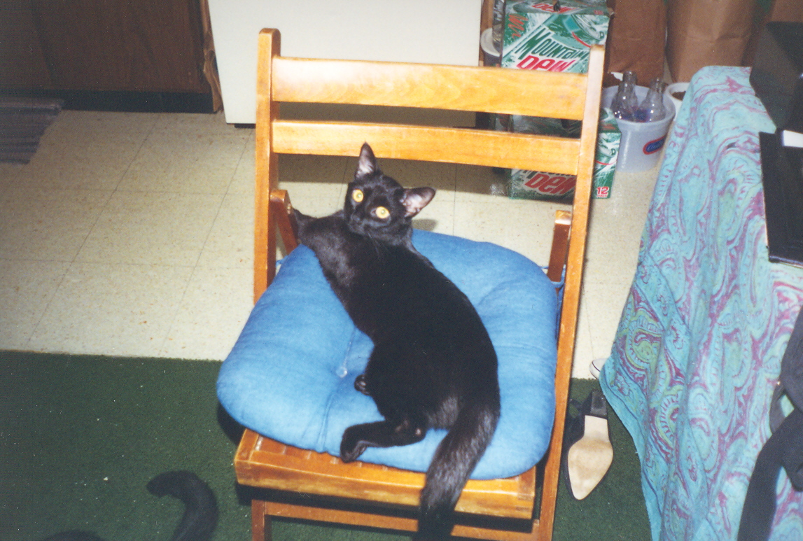 cleo on a chair - fall 1997