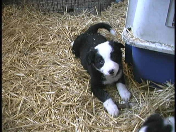 Nifty male puppy 5a