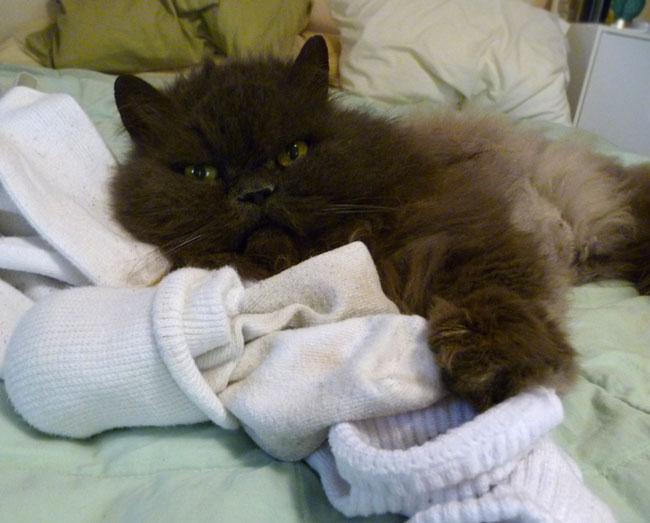 puff-socks