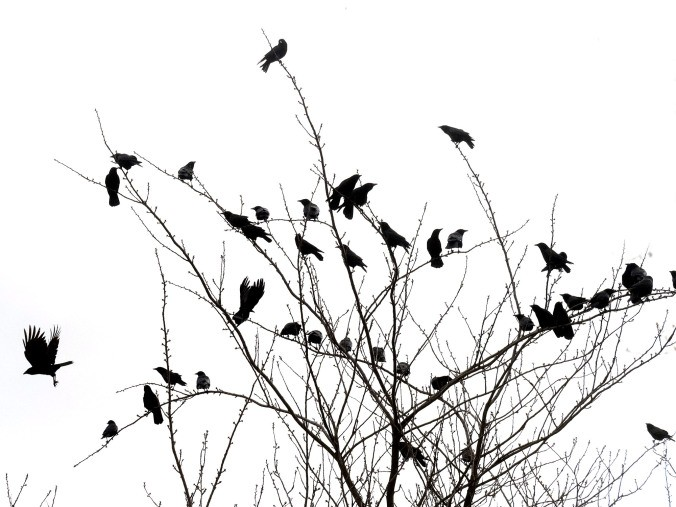 crow-protest-group-mar-7-1
