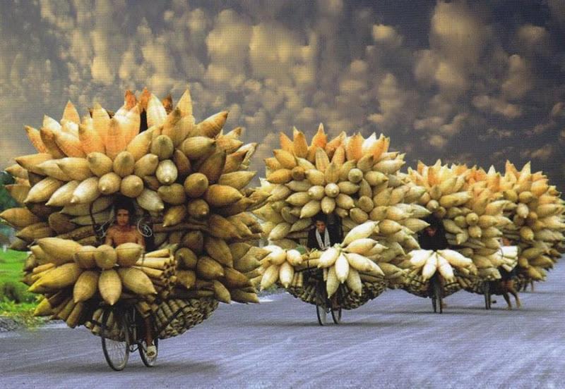 Вьетнамские фермеры едут на рынок