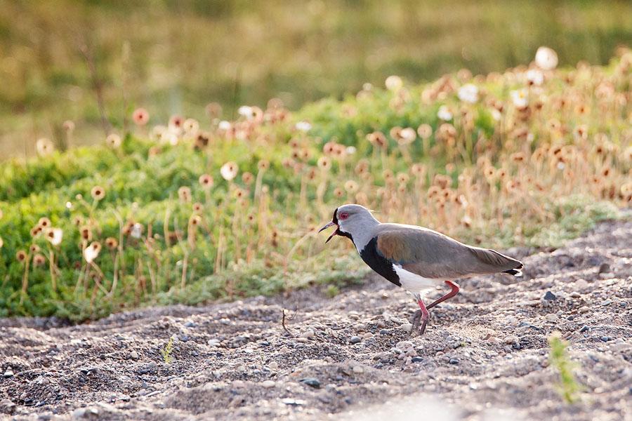 Непонятная птица