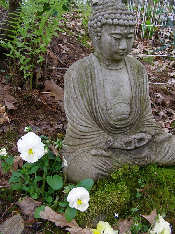 pansies with buddha