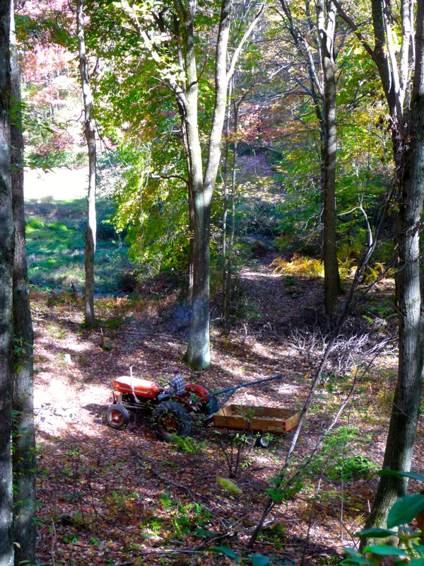 Massey ferguson tractor in the woods