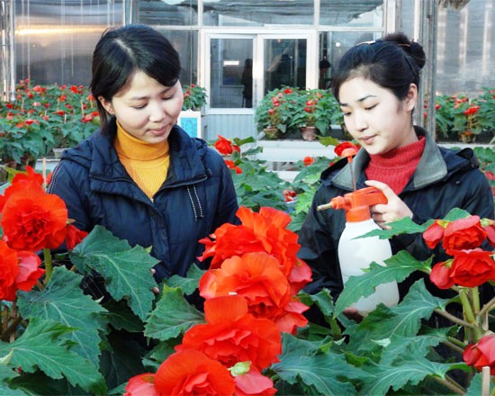 пхеньянские аквариумы десять лет в северокорейском гулаге