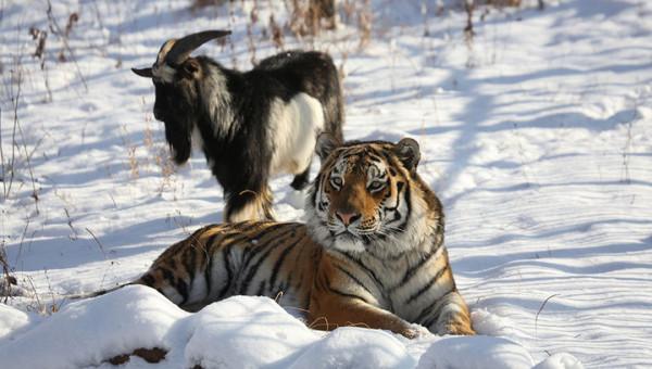 Сексуальные меньшинства среди животных: что не так с Амуром и Тимуром?