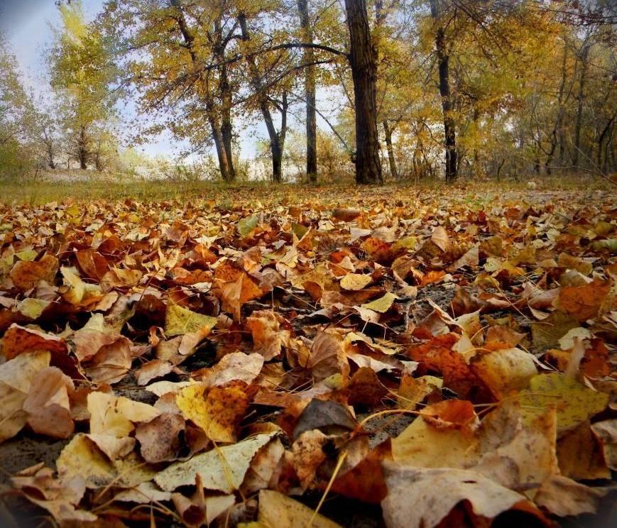 Канал осенью