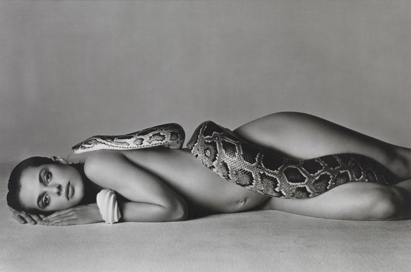 Avedon-snake