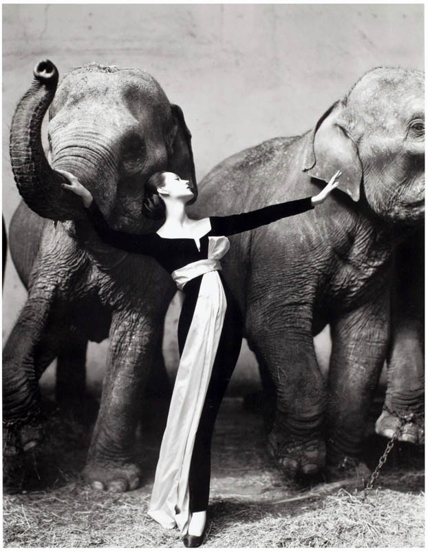 Dovima-and-the-elephants-Christian-Dior-designed-by-Yves-Saint-Laurent.-Photo-Richard-Avedon