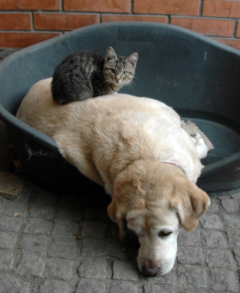 dog_cat4