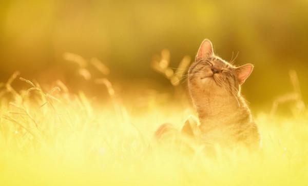 Cat-Sun-God