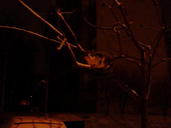 кот на ветке