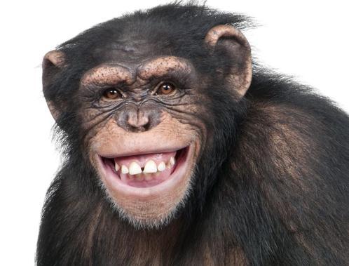 Affe-bringt-Drohne-zum-Absturz_ArtikelQuer