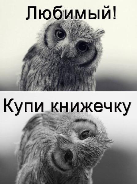 large7Сова