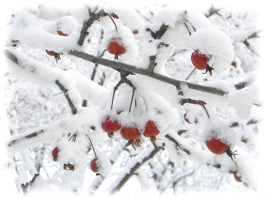 В зимних шапочках