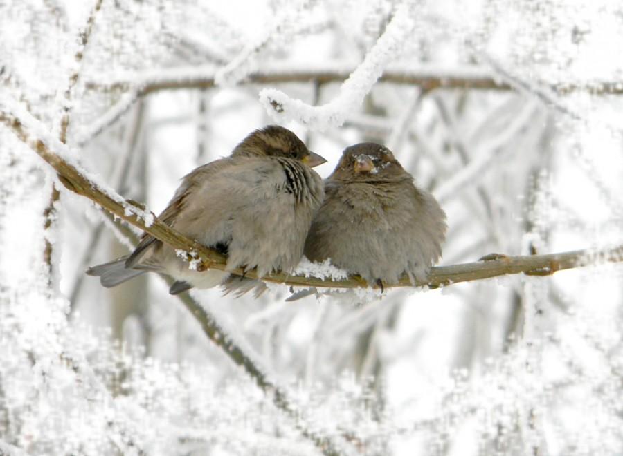 Зимой в Сибири