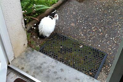 IMG_4610-cat1