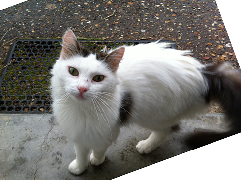 IMG_4622-cat4