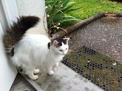 IMG_4623-cat3
