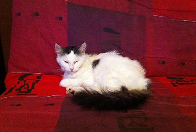IMG_4638-cat5