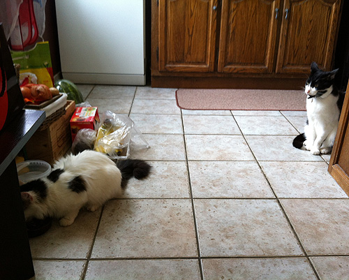 IMG_4642-cat7