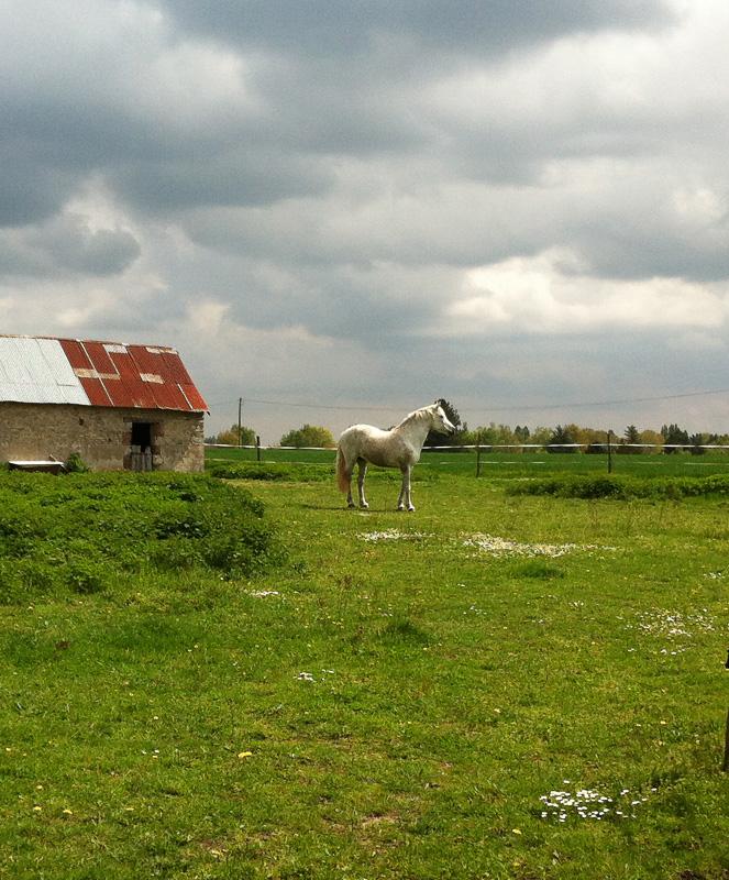 IMG_7456-horse